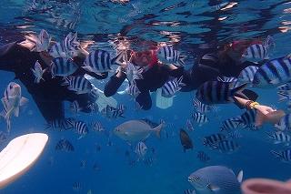 熱帯魚沢山に囲まれる竜宮城の様な青の洞窟シュノーケリング