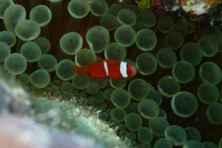 沖縄の海 熱帯魚