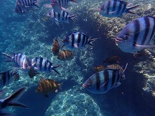 青の洞窟シュノーケリング 綺麗な熱帯魚