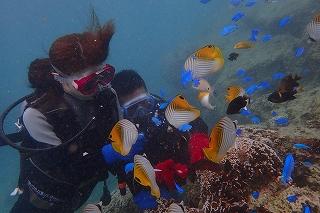 ダイビング 沖縄 餌やり体験