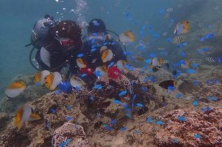 沖縄ダイビング 餌やり体験
