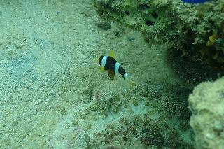 ダイビング 沖縄 熱帯魚