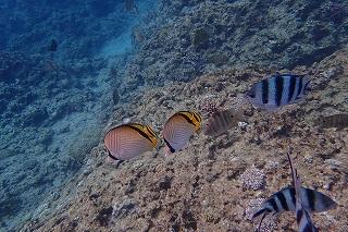 青の洞窟シュノーケリング きれいな熱帯魚