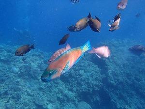 熱帯魚と一緒にシュノーケリング