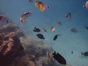 熱帯魚たちとシュノーケリング