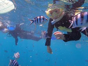 熱帯魚が近くに来るシュノーケリングの餌付け