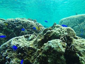 沖縄の綺麗な海でシュノーケリング