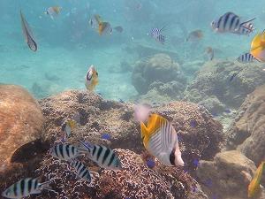 シュノーケリング沖縄自然のちゅら海