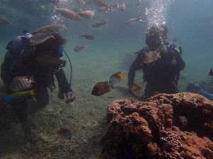 沢山の魚と一緒に泳ぐダイビング