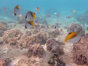 沢山の熱帯魚と泳ぐシュノーケリング