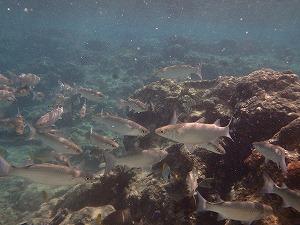 ダイビング魚の群れ