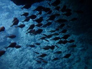 青の洞窟シュノーケリング ハタンポ