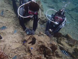 沖縄の海でダイビング