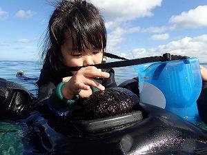 沖縄シュノーケリング子供とナマコ