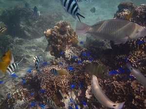 シュノーケリング魚