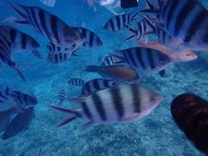 沖縄シュノーケリング魚