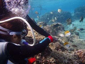 沖縄8歳の子供とダイビング餌付け