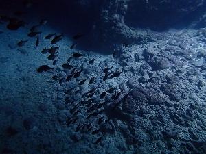 青の洞窟内シュノーケリング