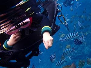 青の洞窟シュノーケリング7歳魚の餌付け