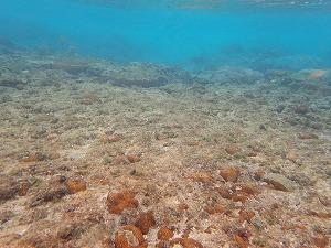シュノーケリング珊瑚礁