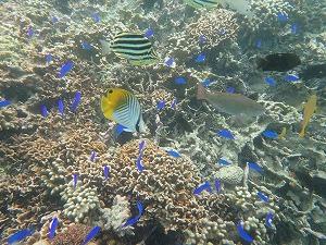 沖縄珊瑚礁が綺麗なポイントでシュノーケリング