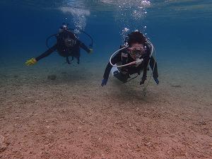 沖縄おすすめダイビング