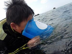 シュノーケリング水中観察