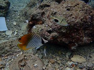 ダイビングスポットお魚