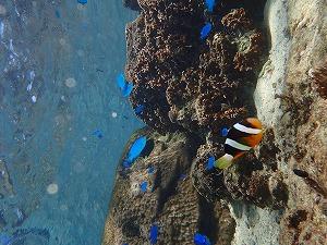 シュノーケリング自然の水族館沖縄