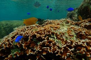 ダイビング珊瑚礁と魚