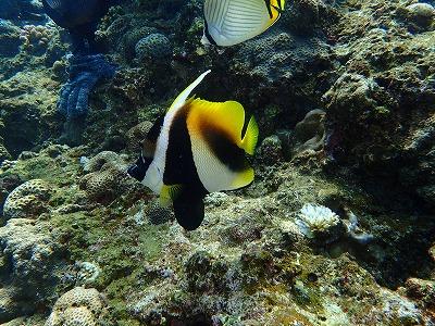 ダイビング 魚