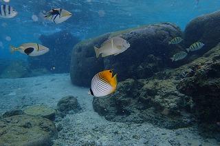 ダイビング水中魚