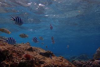 ダイビングちゅら海