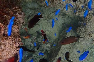 沖縄シュノーケリングお魚