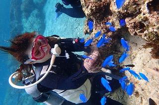 餌付けで熱帯魚が沢山集まる体験ダイビング