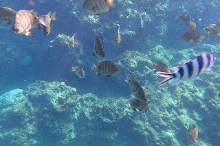 青の洞窟シュノーケル、魚