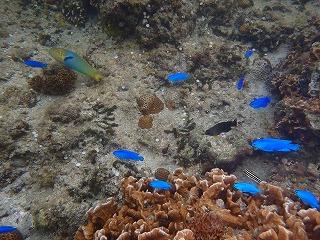 熱帯魚沢山の海でシュノーケリング