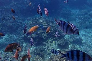 青の洞窟ポイントシュノーケリングで見れる魚