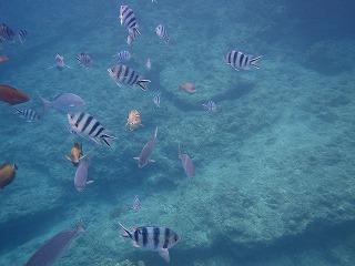 青の洞窟ポイントお魚