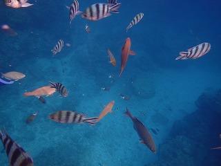 青の洞窟ポイント魚