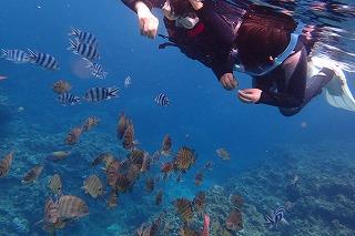 青の洞窟ポイント魚の餌付け