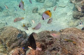 沖縄シュノーケリング熱帯魚