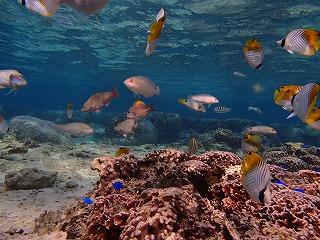 自然のちゅら海