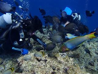 沖縄ダイビング餌付け