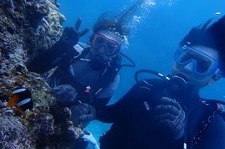 青の洞窟体験ダイビング、クマノミ
