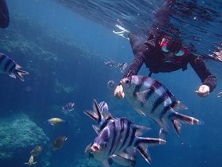 青の洞窟シュノーケリング魚の餌付け