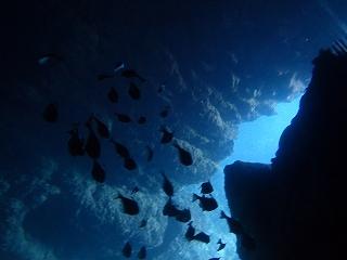 青の洞窟シュノーケリング水中