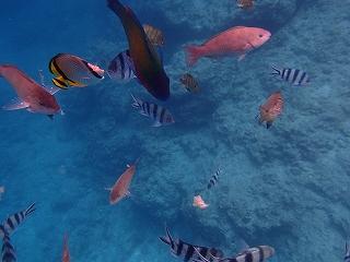 青の洞窟シュノーケリング 魚
