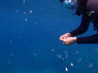 魚に餌付け青の洞窟ポイント