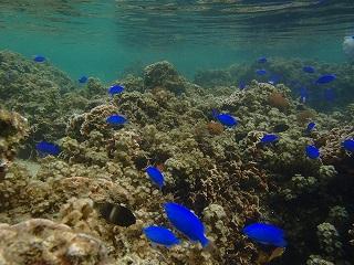 珊瑚礁ポイントでシュノーケリング